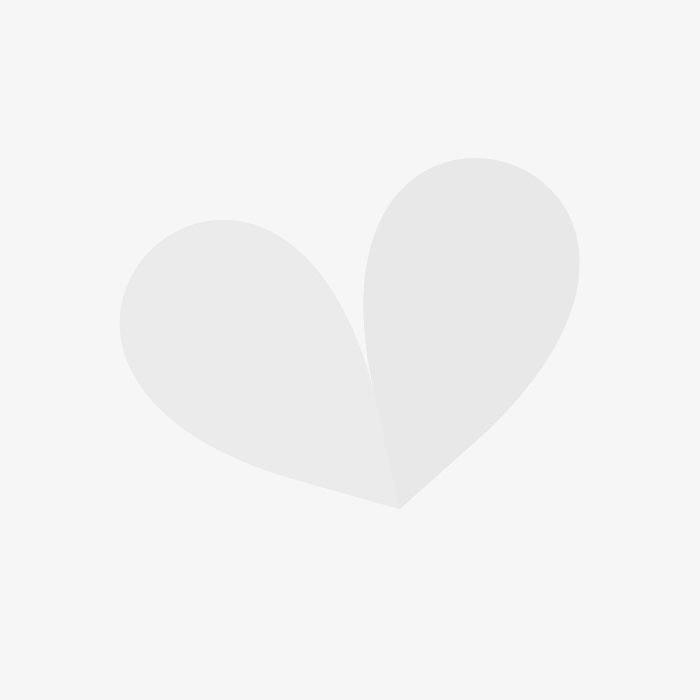 Ceramic Bird Bath Blue with 2 Birds